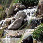 pondless waterfalls round rock texas
