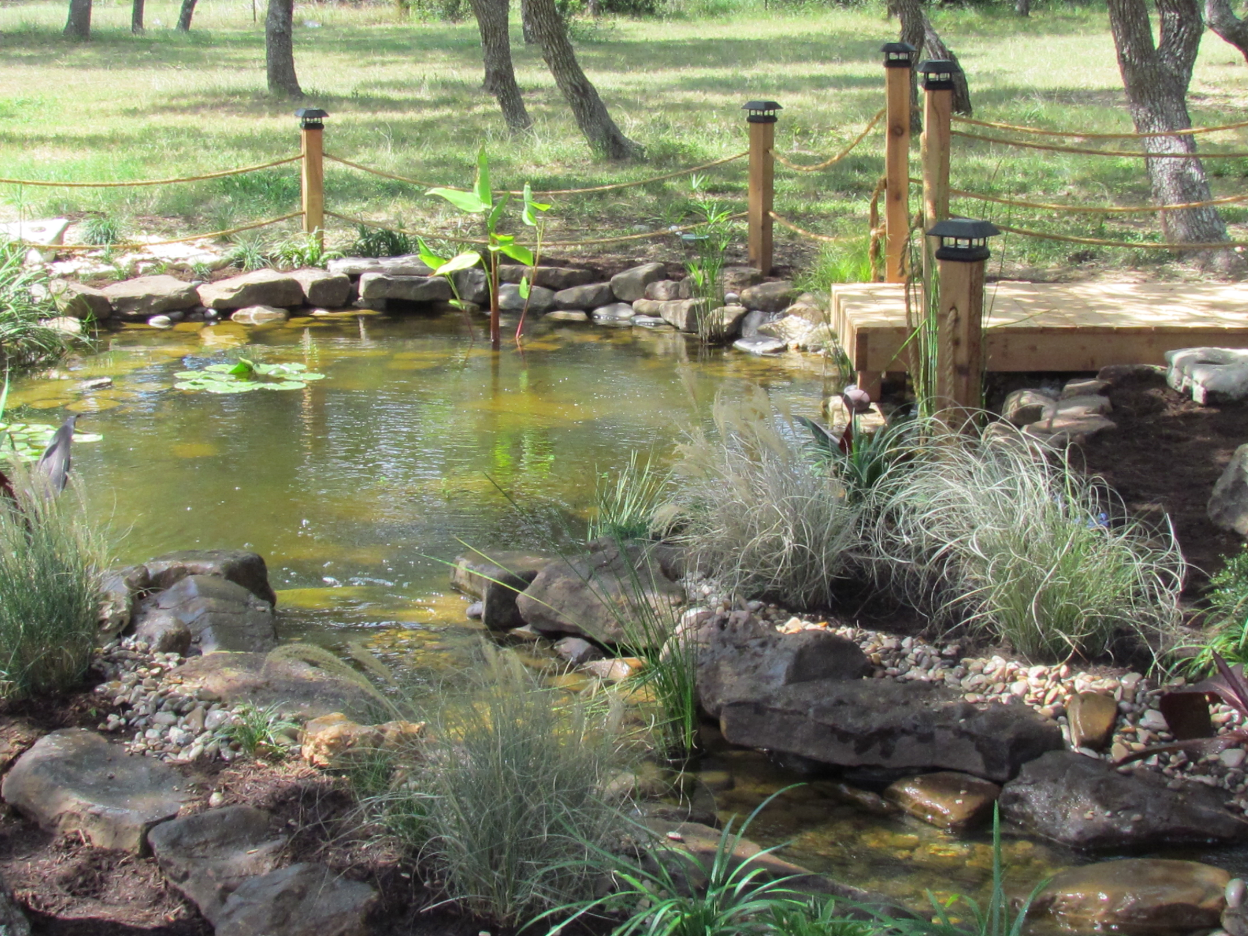 Pondless pond pricing the pond doctor for Koi pond price