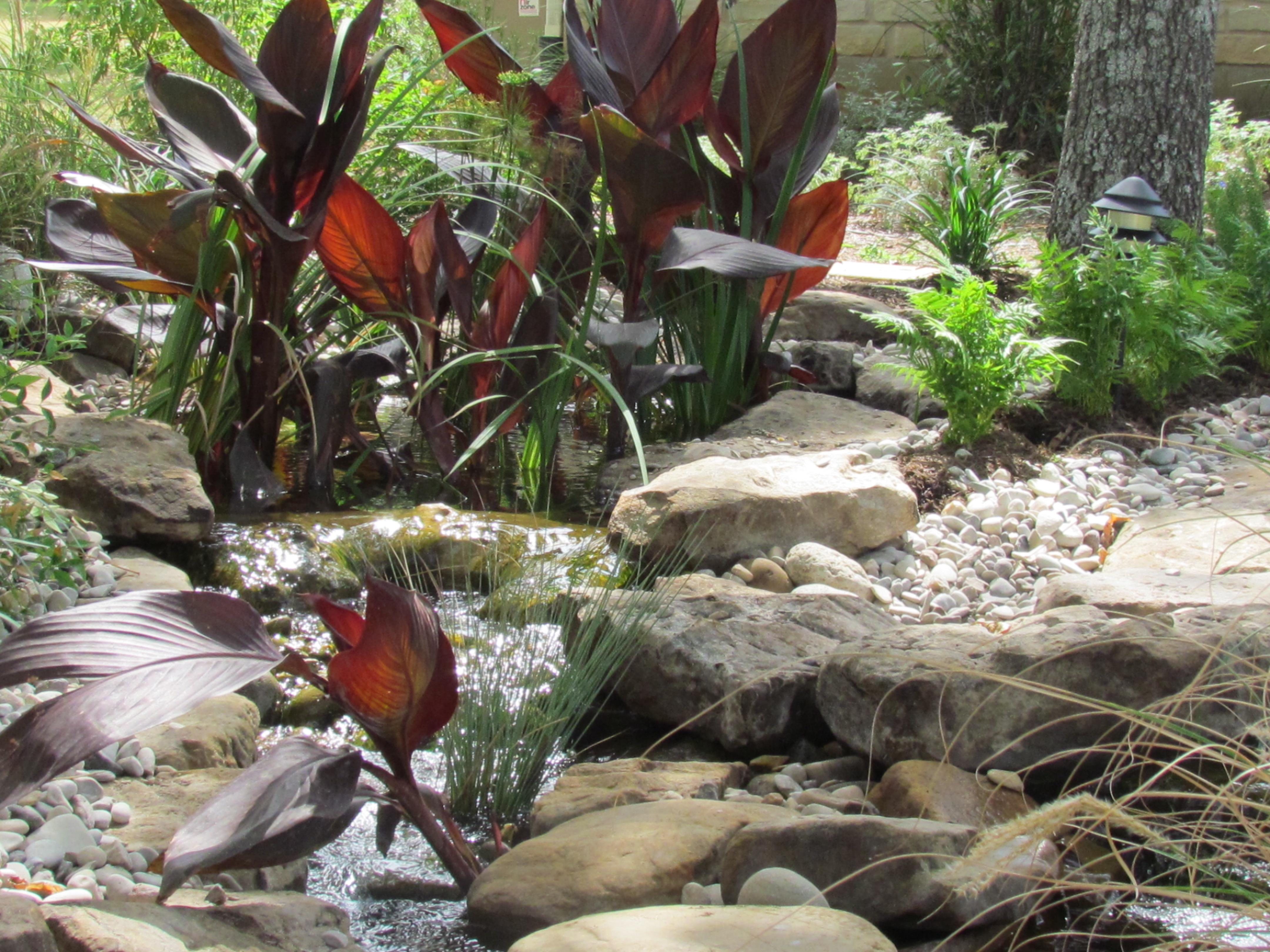 Pondless pond pricing the pond doctor for Plants around koi pond