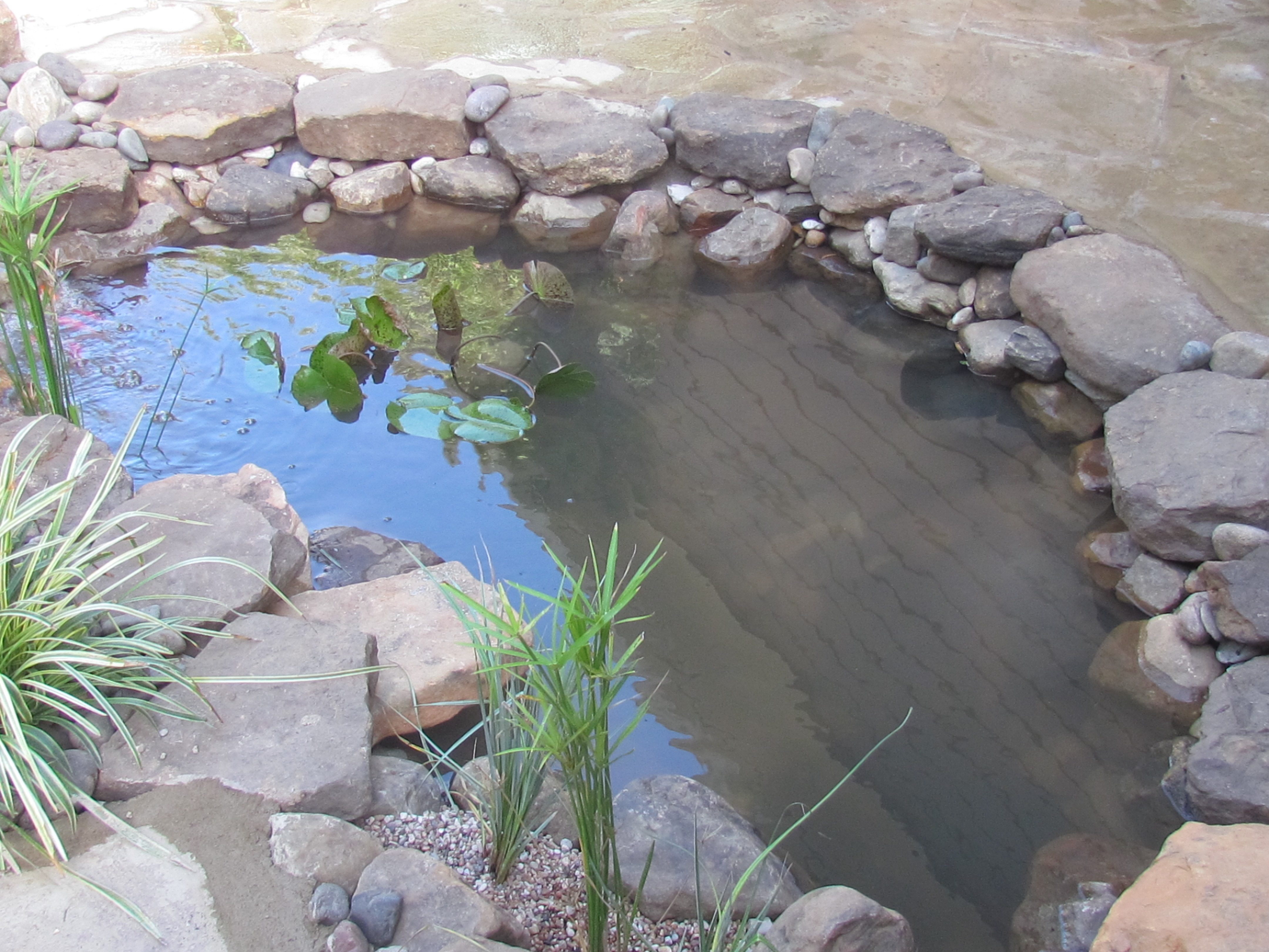 Goldfish Ponds Amp Water Gardens The Pond Doctor The