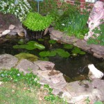 Water Garden goldfish pond