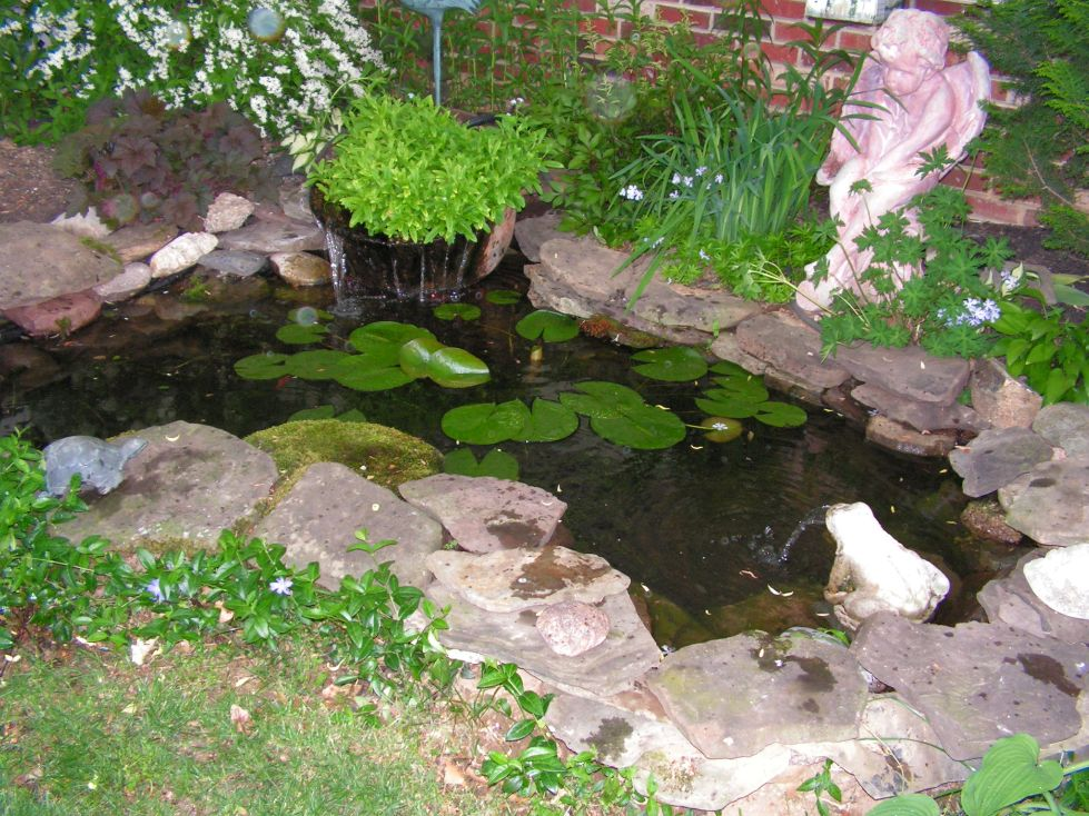 1000 images about water features ponds on pinterest for Outdoor goldfish pond ideas