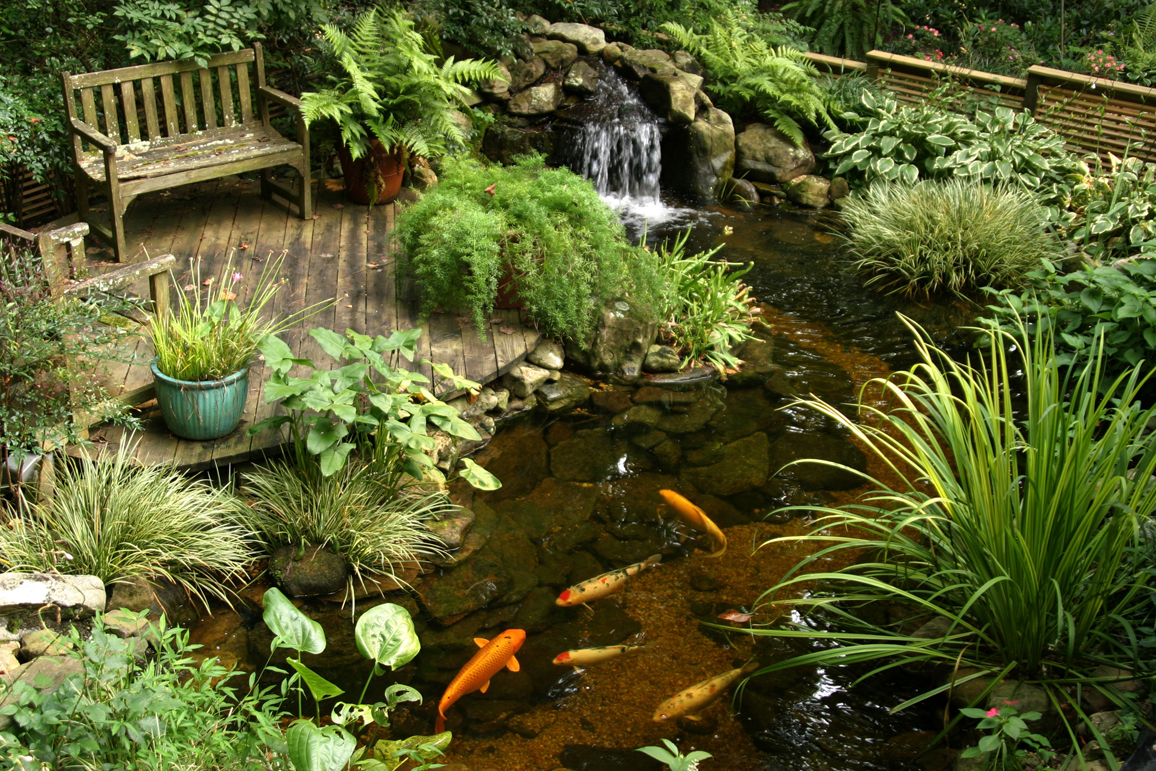 Ponds and pondless water features for sale the pond doctor for Fish pond landscape ideas