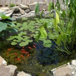 goldfish-pond water garden