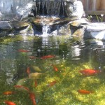 goldfish-pond-waterfall