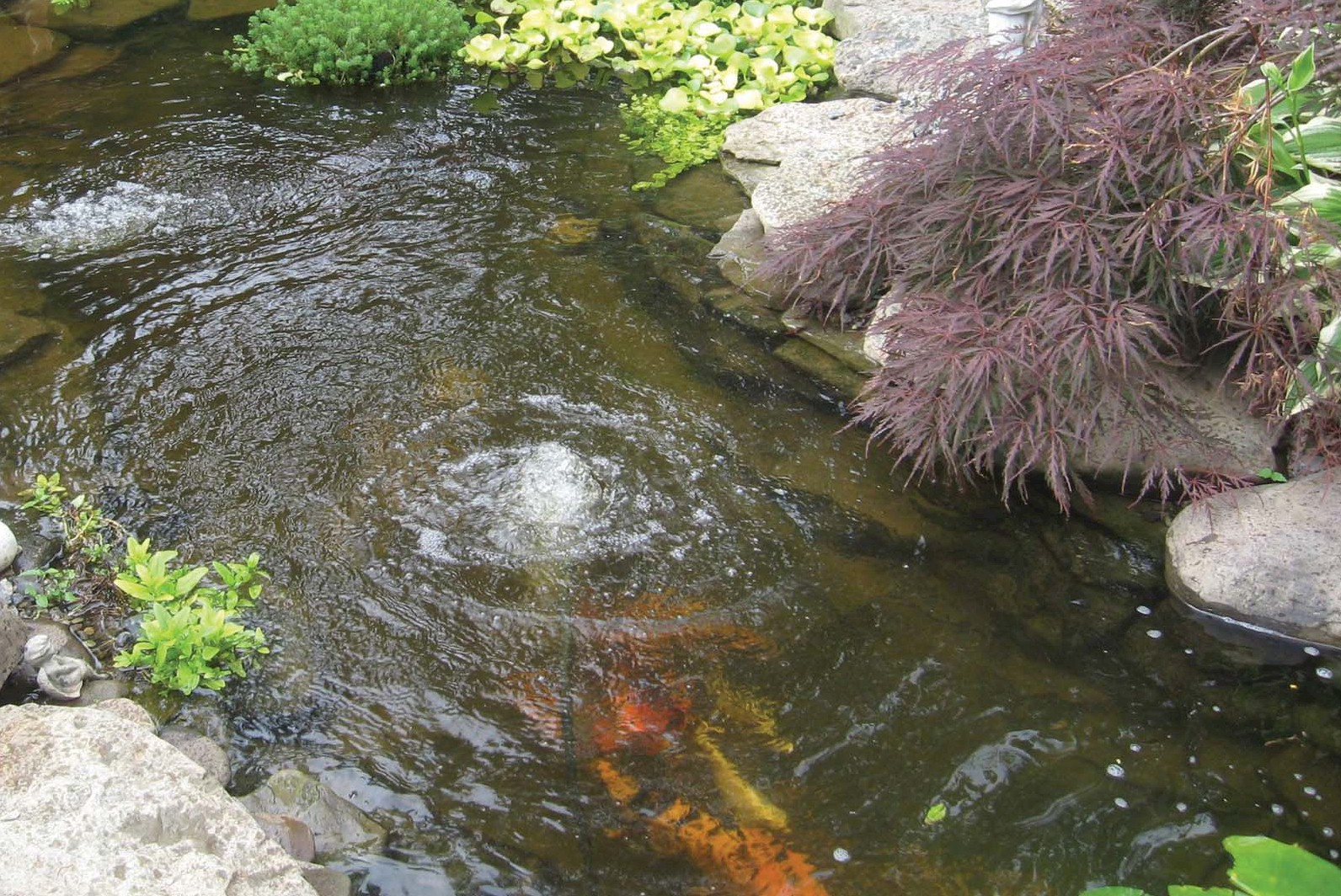 Emergency Pond Service Pump Replacement The Pond Doctor