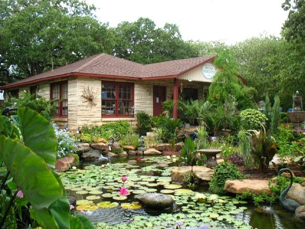 Who to choose for a water garden or koi pond austin texas for The water garden